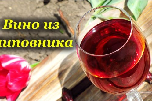 Вино из шиповника в домашних условиях