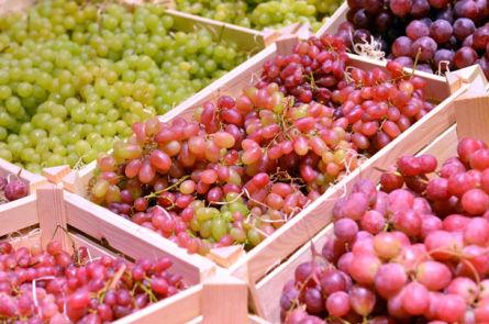 Ставим вино из винограда столовых сортов