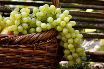 Приготовление в домашних условиях вина из белого винограда