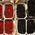 Приготовление наливки из черной и красной смородины в домашних условиях