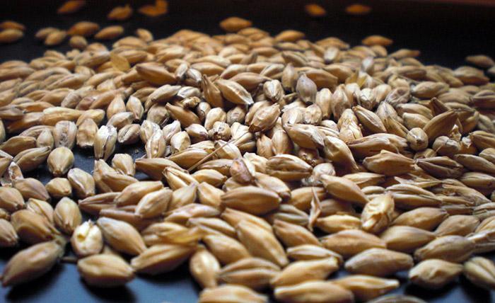 Солод из пшеницы