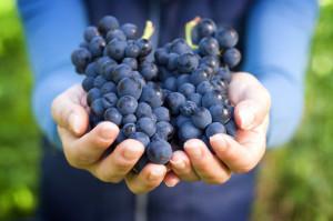 Давление винограда руками