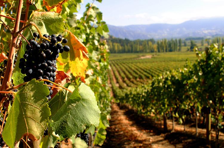 приготовление грушевого вина в домашних условиях