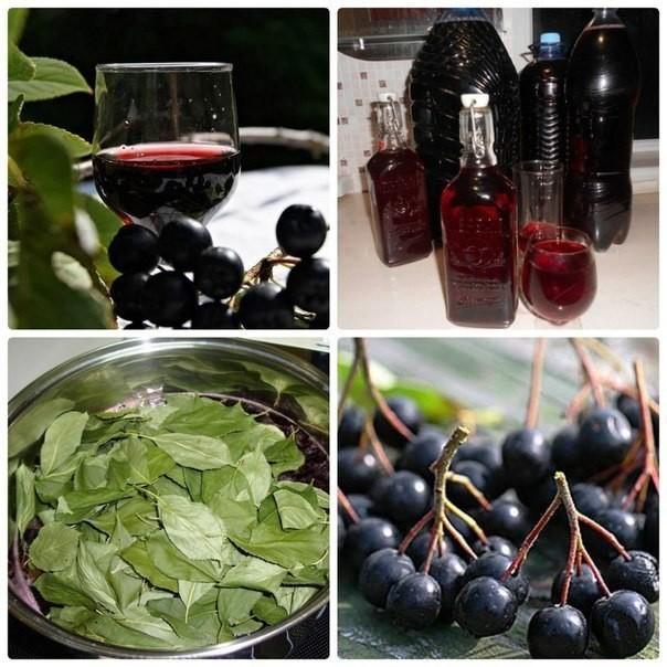 Как приготовить наливку из черноплодной рябины в домашних условиях 825