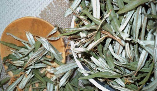 настойка на листьях облепихи